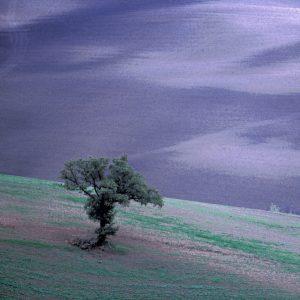 Purple sky lone tree in field
