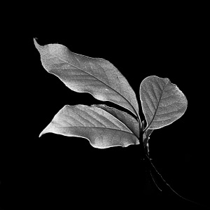 Leaf, Masoud Teimory, Consultant Ophthalmologist & Photographer - Art, Empathy & Science